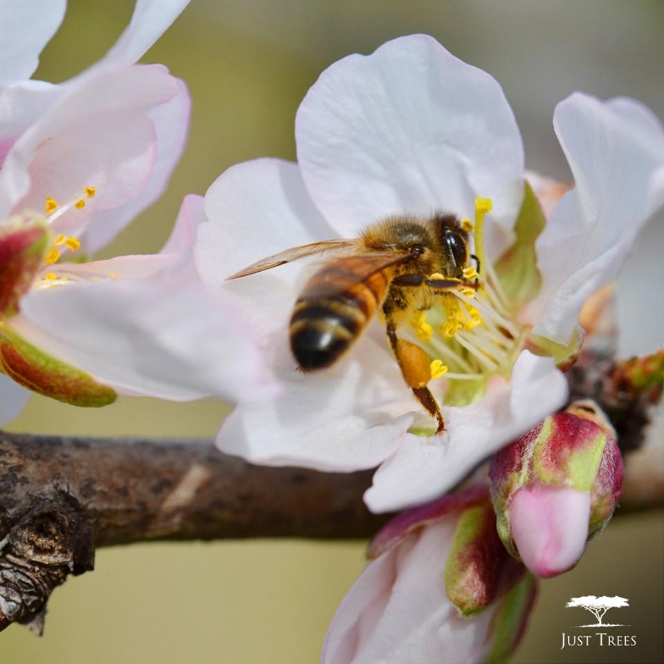 TreeKeepers keep bees livingflower